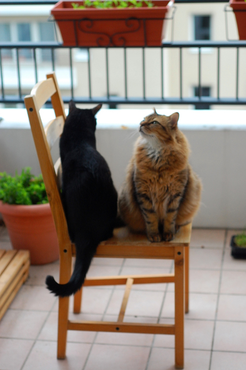 Susu and Kanoko sharing a chair on the balcony